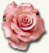 ecuador-flor-rosa.jpg