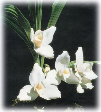 guatemala-flor-monja-blanca.jpg