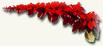 trinidadytobago-flor-chaconia-o-wild-poinsettia.jpg